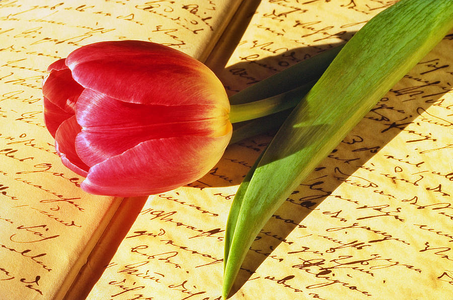 Bloom Photograph - Tulip On An Open Antique Book by Tony Ramos