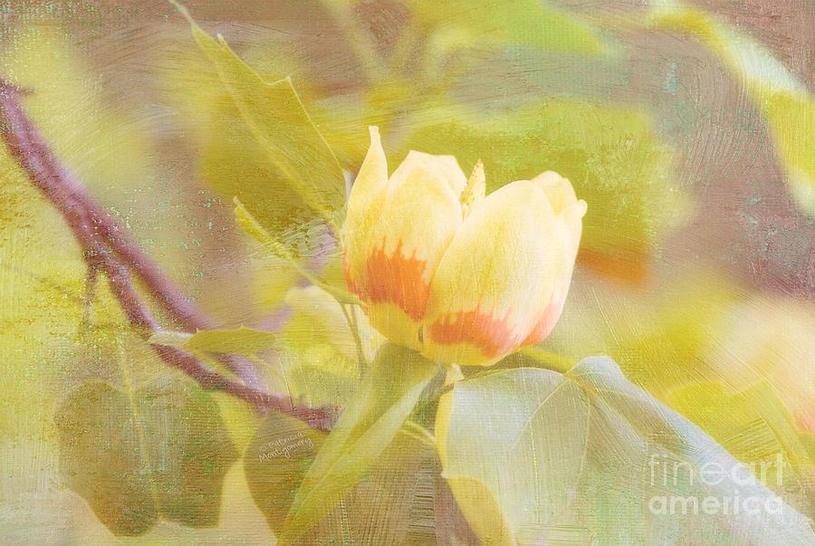 Tulip Poplar by Patricia Montgomery