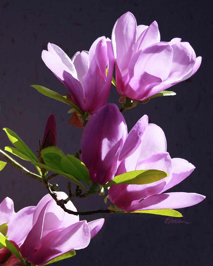 Fine Art Painting - Tulip Tree by Elorian Landers