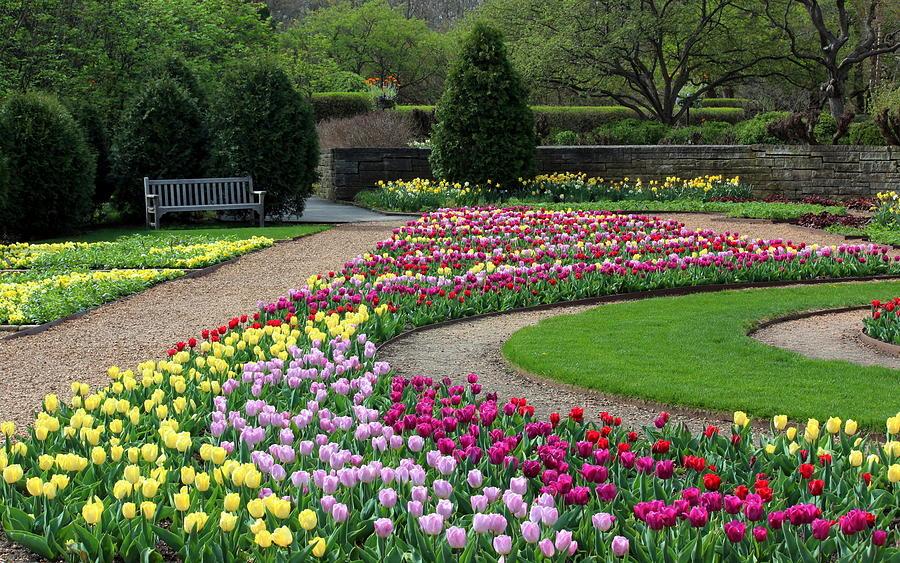 Tulips At Cantigny Park by Rosanne Jordan