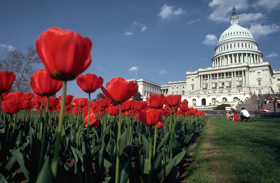 Flowers Photograph - Tulips At The Capitol by Carl Purcell