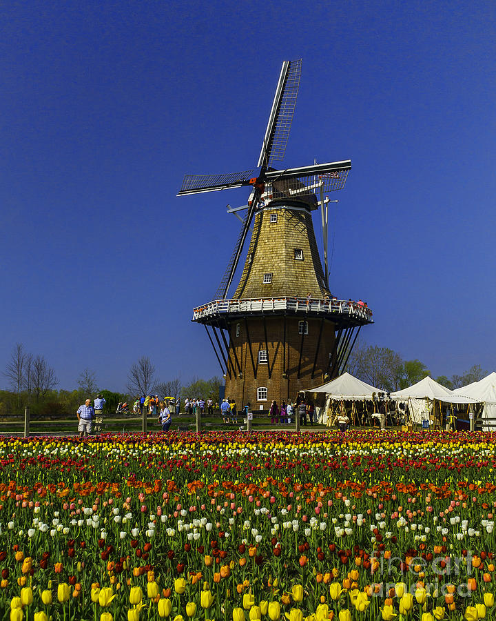 Holland Photograph - Tulips At The Windmill by Nick Zelinsky