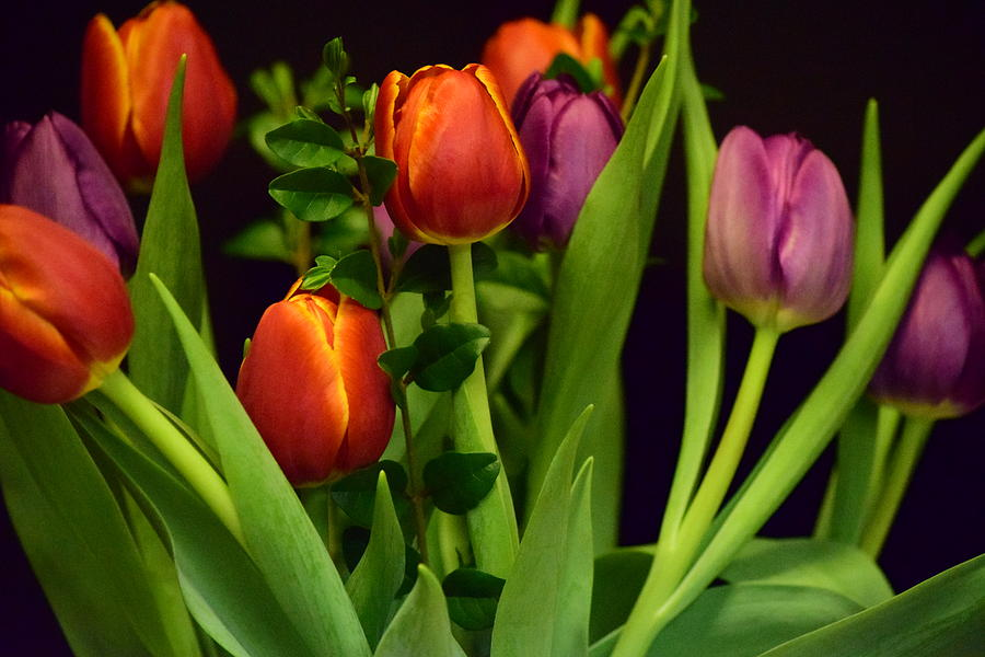 Tulips Photograph - Tulips by Bonnie Bruno