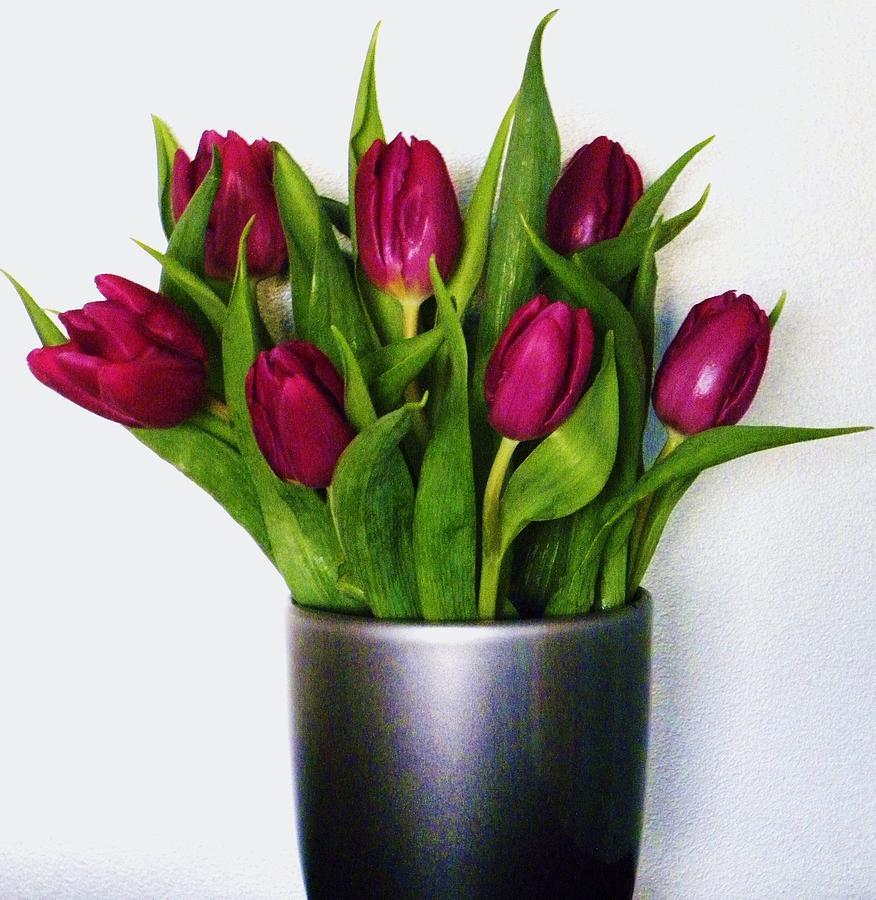 Tulips Photograph - Tulips by Cindy Gacha