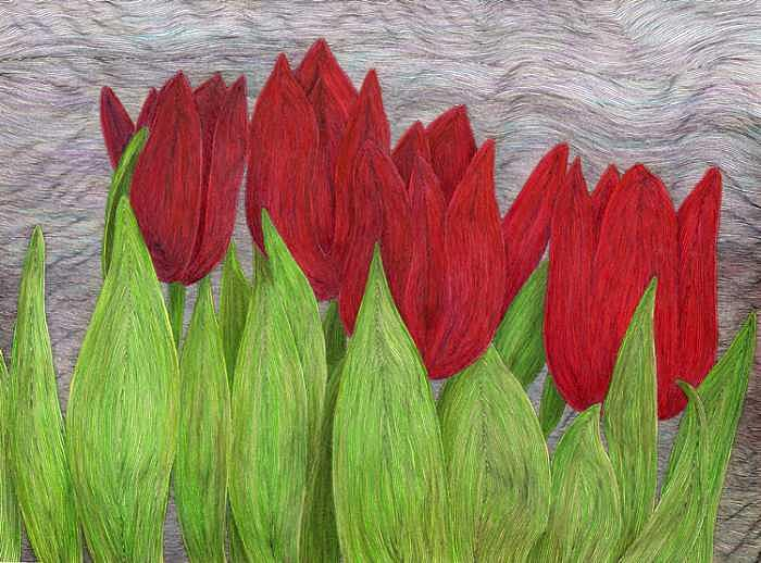 Tulips Drawing by Donna Gierman
