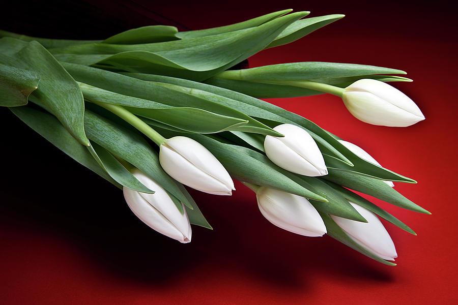 Flower Photograph - Tulips I by Tom Mc Nemar