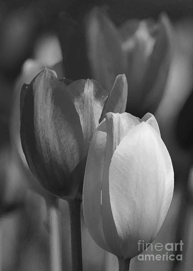 Tulips in Black and White by Robert  Suggs