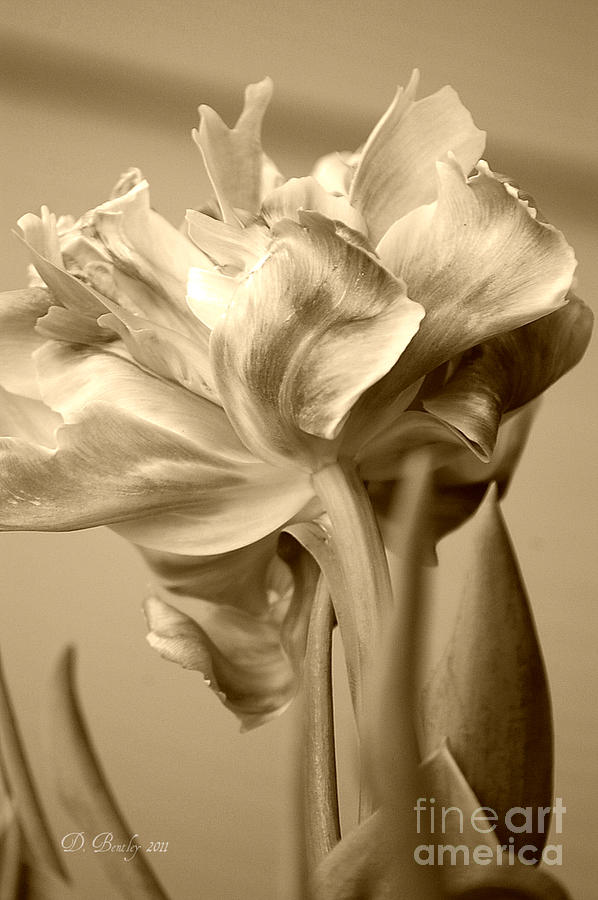 Tulips in Sepia by DONNA BENTLEY