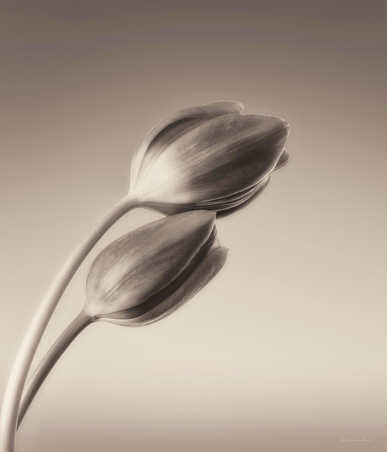 Tulips Photograph - Tulips Monochrome by Wim Lanclus
