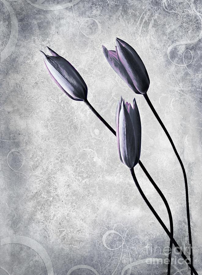 Flowers Photograph - Tulips by Jacky Gerritsen
