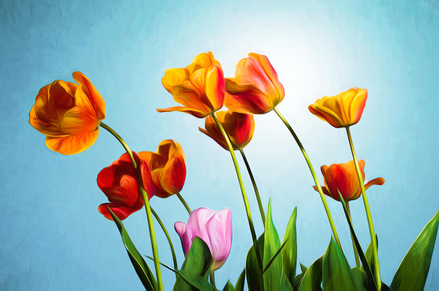 Flash Photograph - Tulips by Trevor Wintle