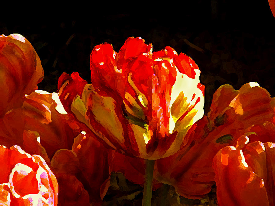 Flowers Tulips Photograph - Tulips  by Valerie  Moore