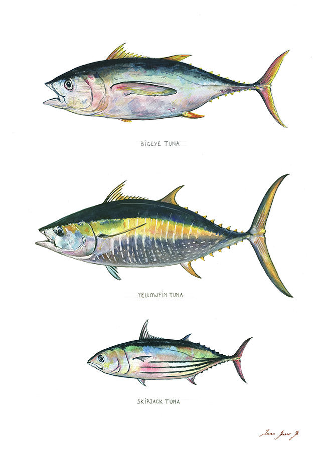 Yellowfin Tuna Painting - Tuna Fishes by Juan Bosco