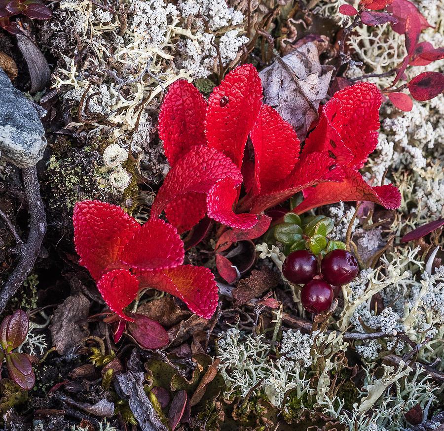 Tundra Photograph - Tundra by Joanie Havenner