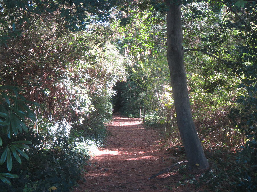 Forest Tunnel Photograph - Tunel Of Light  by Kate Watson