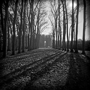 Black And White Photograph - Tunnel Of Trees by Troy Ziel