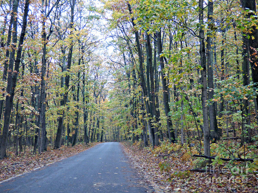 Fall Photograph - Tunnel Of Trees by Scott Ward