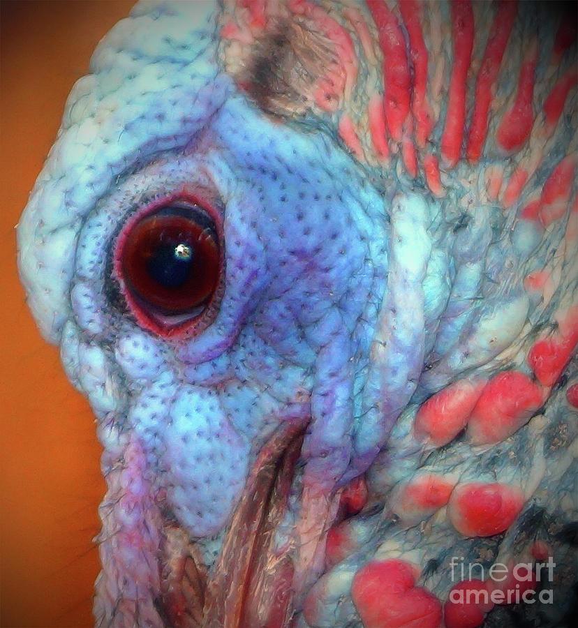 Turkey Head Shot Photograph - Turkey Head Shot by Kim Pate