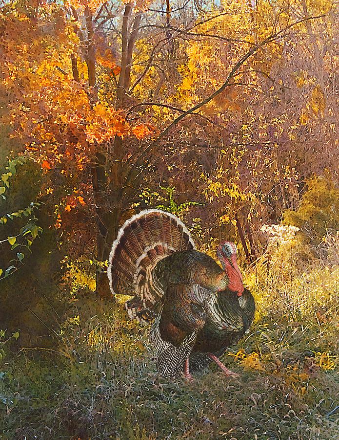 Turkey in the woods by John Dyess