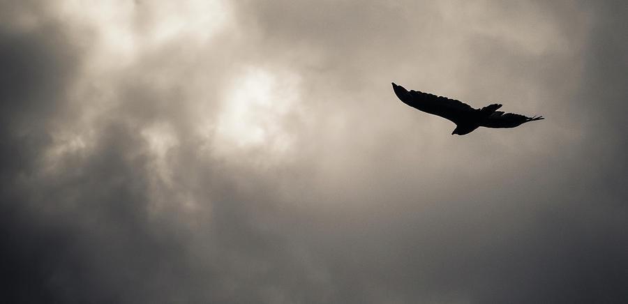 Vulture Photograph - Turkey Vulture by Trance Blackman