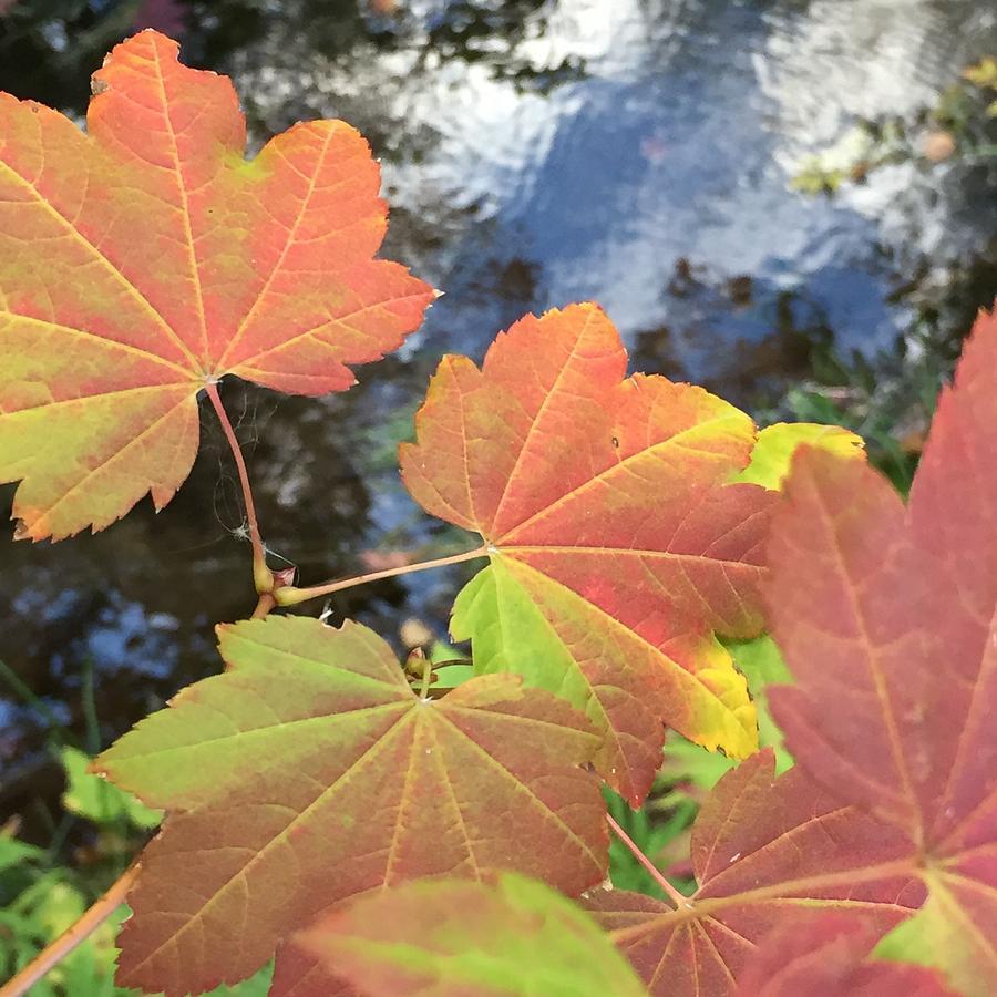 Leaf Photograph - Turning by Vonda Drees