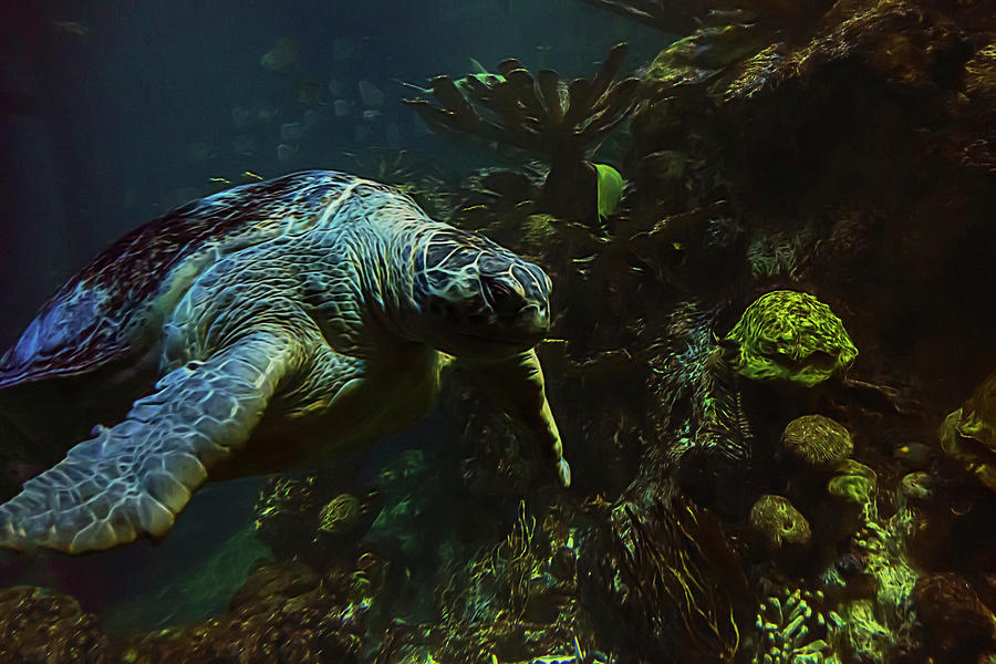 Aquarium Photograph - Turtle Crawl by Janet Fikar