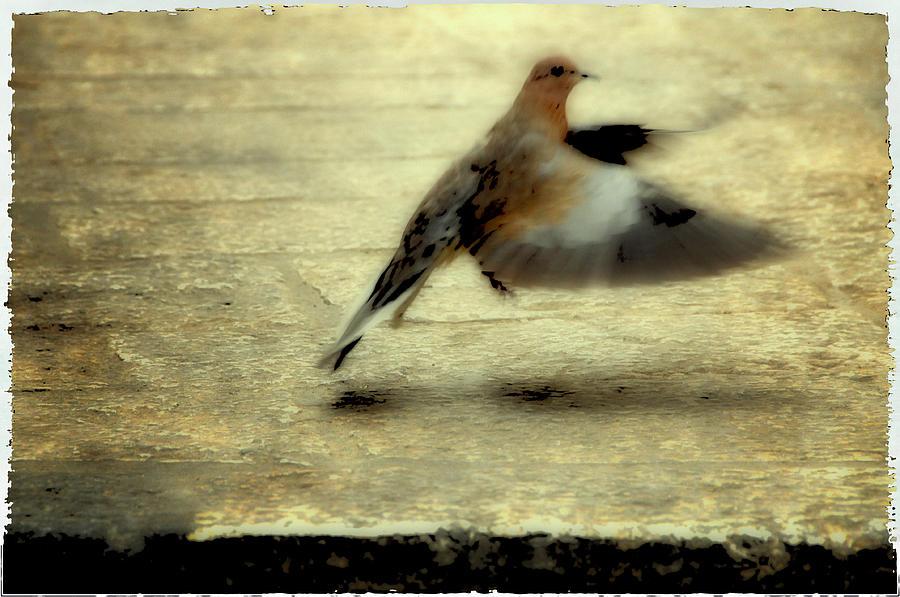 Jewish Photograph - Turtle Dove by Deb Cohen