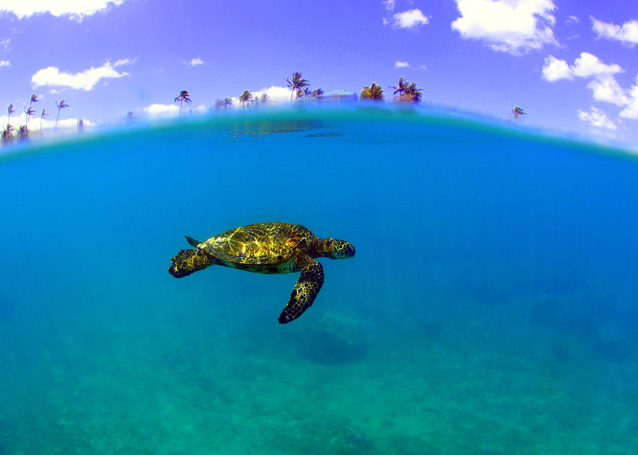 Turtle Island Photograph by Todd Hummel