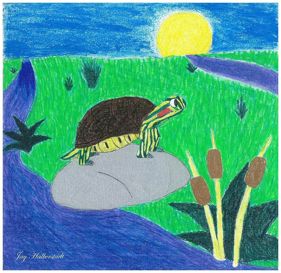 Turtle by Jayson Halberstadt