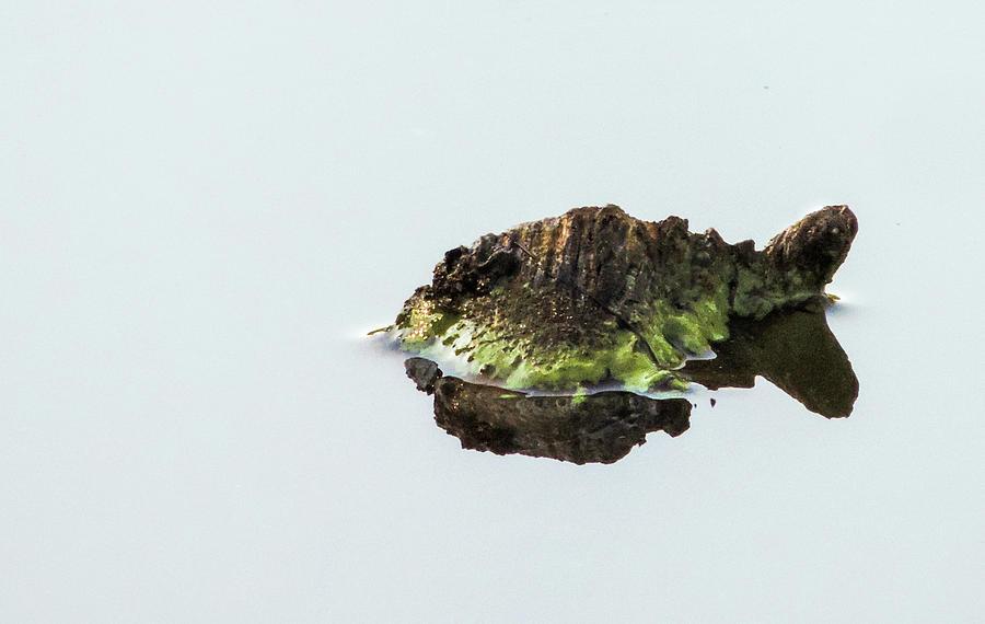 Turtle Photograph - Turtle or Mountain  by Randy J Heath