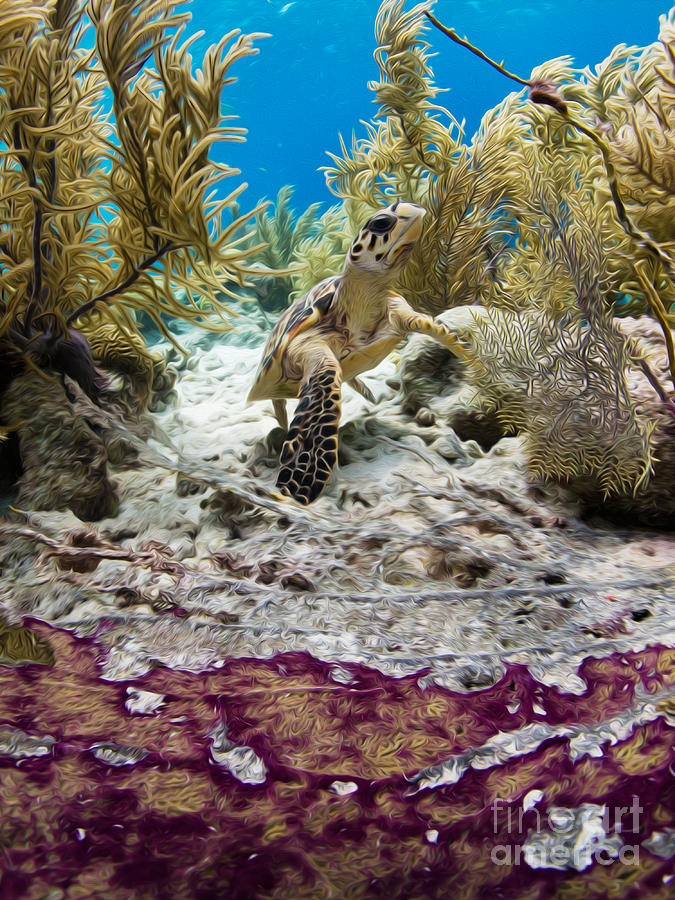 Hawksbill Photograph - Turtle Red Carpet by Athoyo