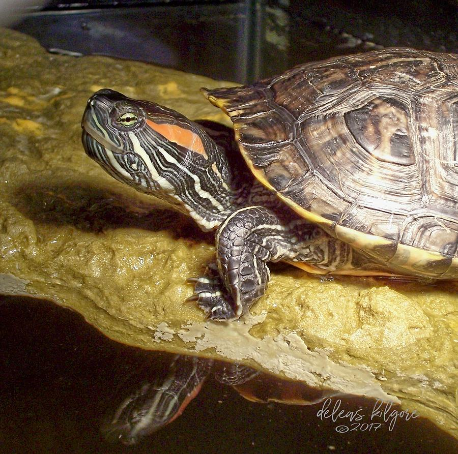 Turtle Reflections by Deleas Kilgore
