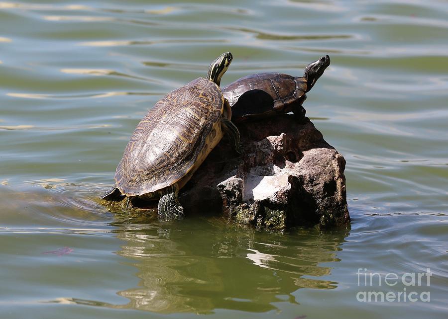 Turtle Rock Photograph