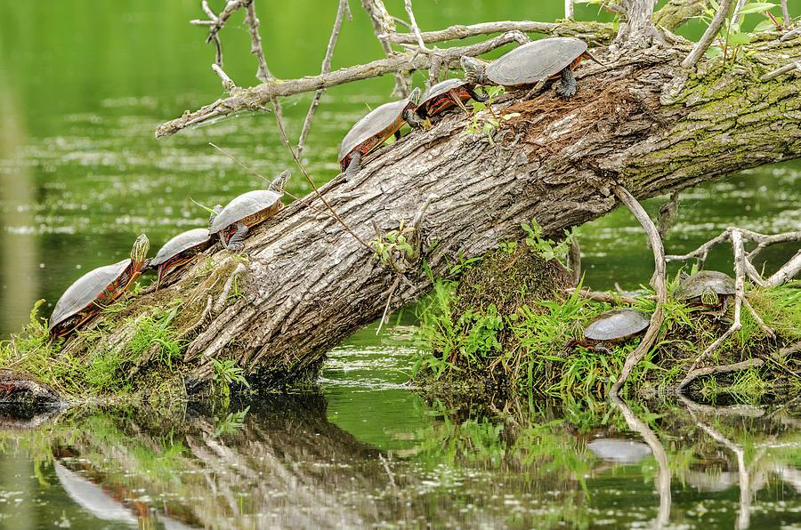 Turtle Trunk by Steven Santamour