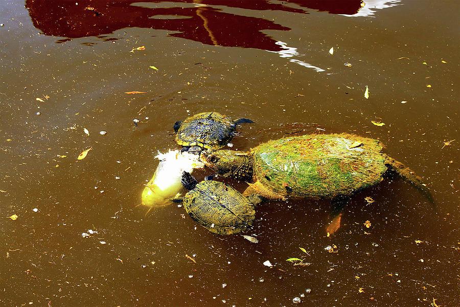 Turtles Lunchtime by Linda Ritlinger