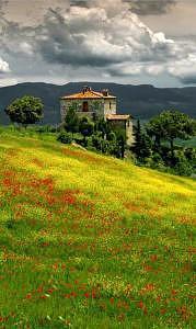 Tuscan Spring Photograph by Jane Baron