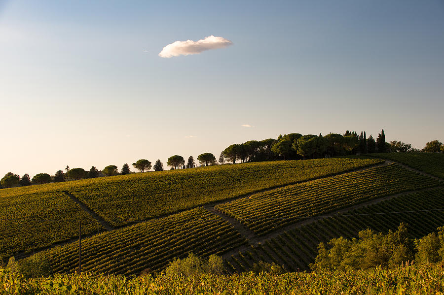 Tuscany Photograph - Tuscan Vineyard by Wim Slootweg