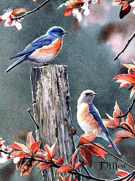 Birds Drawing - Tweeting by Janet Moss