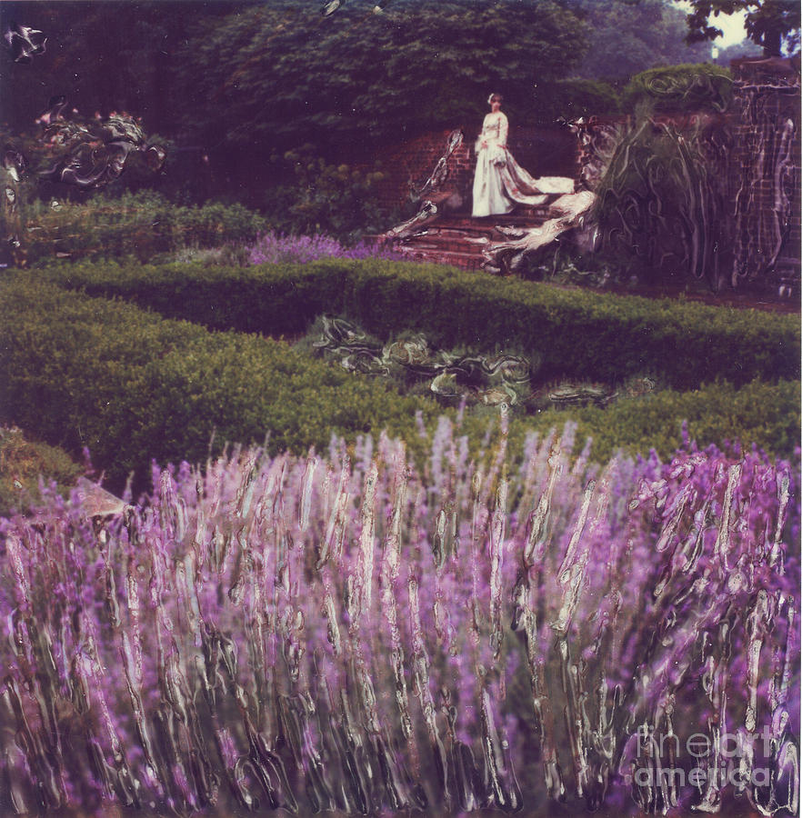 Polaroid Photograph - Twilight Among The Lavender by Steven  Godfrey