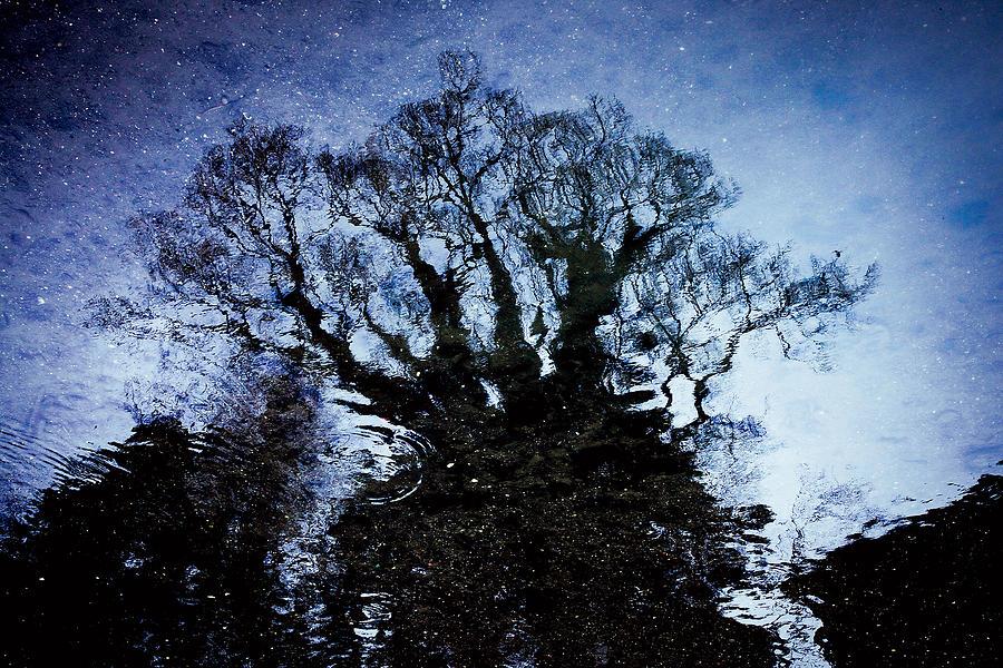 Japanese Photograph - Twilight Illusion 2010 by Sachiko Ide