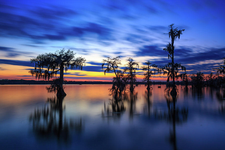 Twilight on Lake Martin Swamp by Tim Stanley