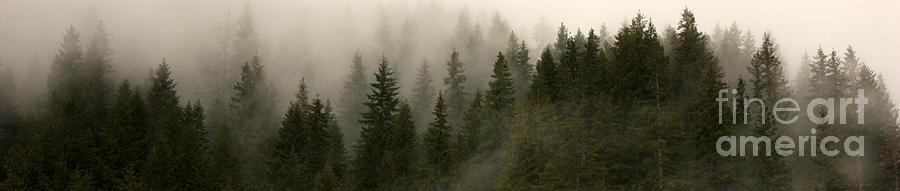 Forks Photograph - Twilight Mist by Carol Groenen