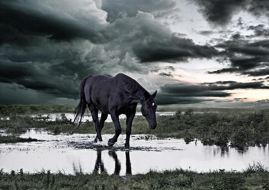 Horse Photograph - Twilight Of The Gods by Joachim G Pinkawa