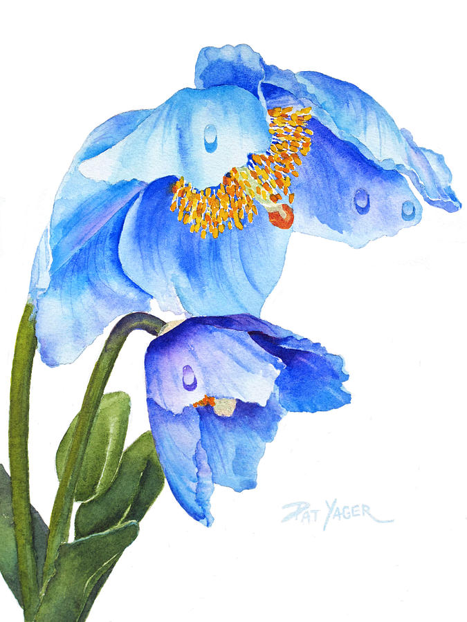 Twin Blue Poppies Painting By Pat Yager