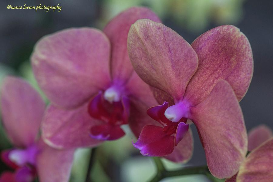 Twin Orchids by Nance Larson