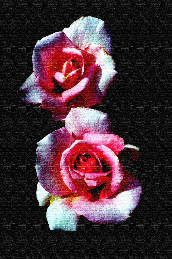 Rose Photograph - Twin Roses by Ralph  Perdomo