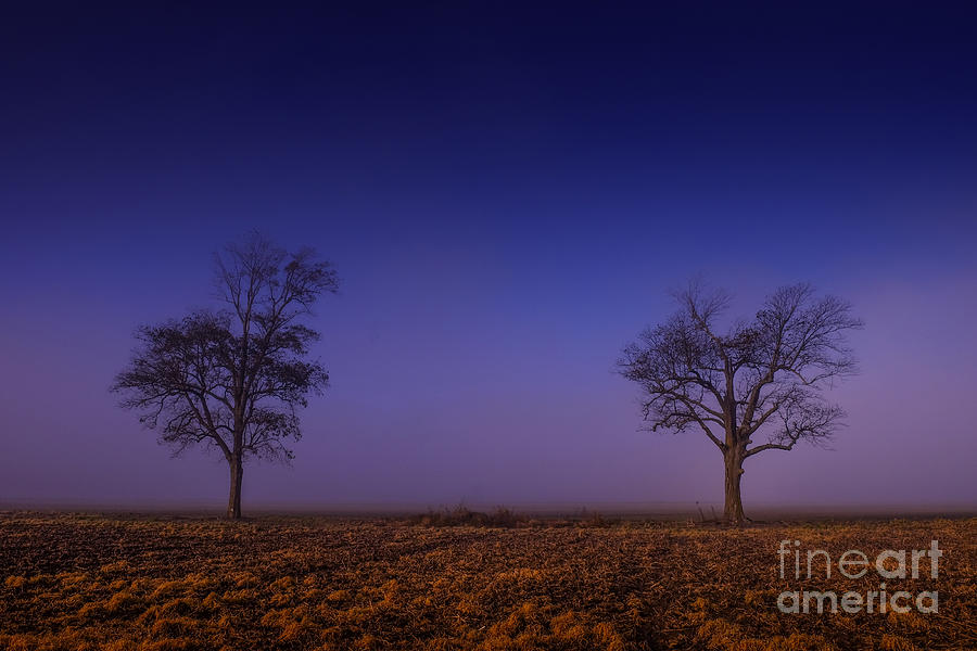 Twin trees in the Mississippi Delta by T Lowry Wilson