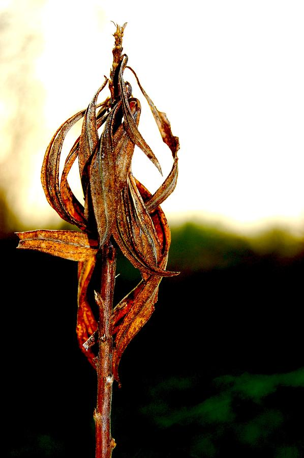 Nature Photograph - Twist Plant by Lauren  Macko