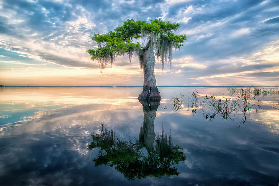 Twisted Cypress Mirror by Ghostwinds Photography