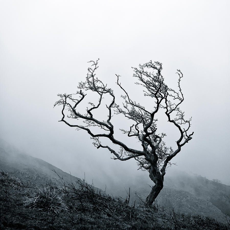 Tree Photograph - Twisted by Dave Bowman